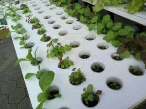 thermocol water farming
