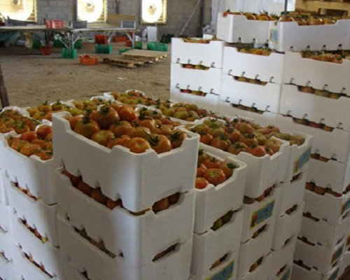 Fruit Packaging Box, Thermocol Boxes, Fruit Packaging Boxes