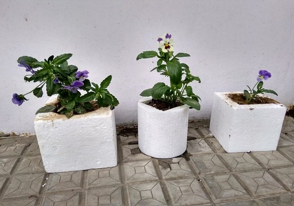 thermocol boxes for plants