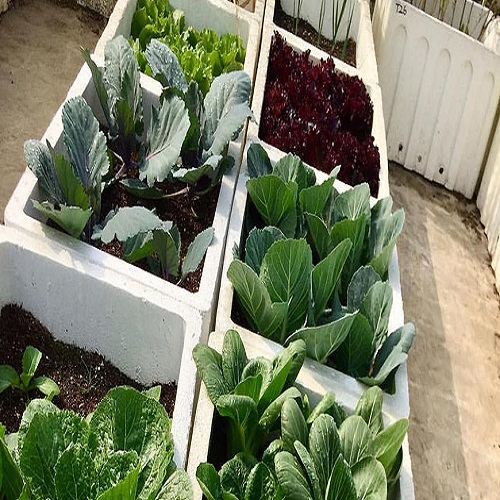 thermocol boxes for farming